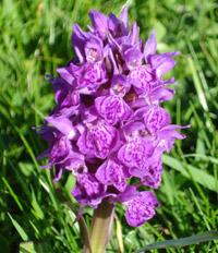 Orchidée © Sabrina Schreiber